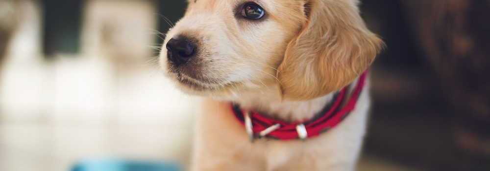 pet health insurance Kent WA